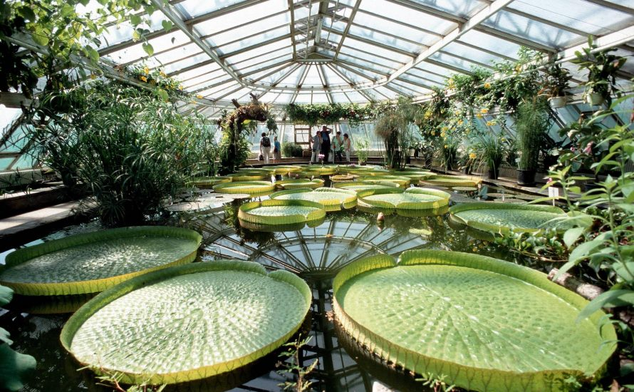 FU-Präsidum will Belegschaft des Botanischen Gartens spalten