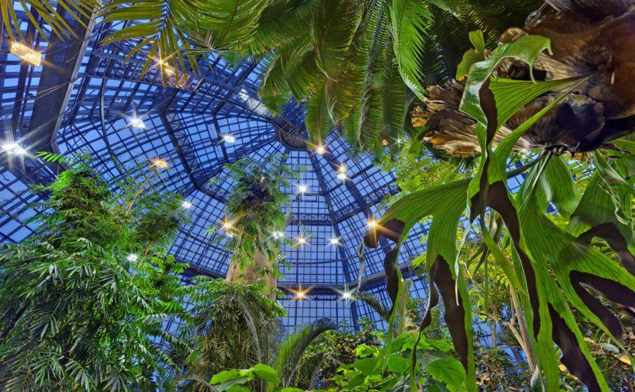 Tropischer Protest gegen Ausgliederung am Botanischen Garten Berlin
