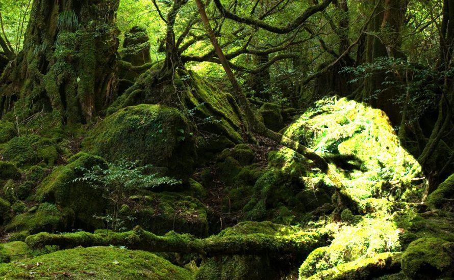 """John Bellamy Foster: """"Der Bruch im Stoffwechsel der Erde ist unsere grundlegendste Herausforderung"""" (II)"""
