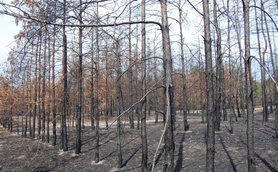 Sozialismus und Umweltzerstörung: Warum wurde der Stalinismus ökologischen Ansprüchen nicht gerecht?