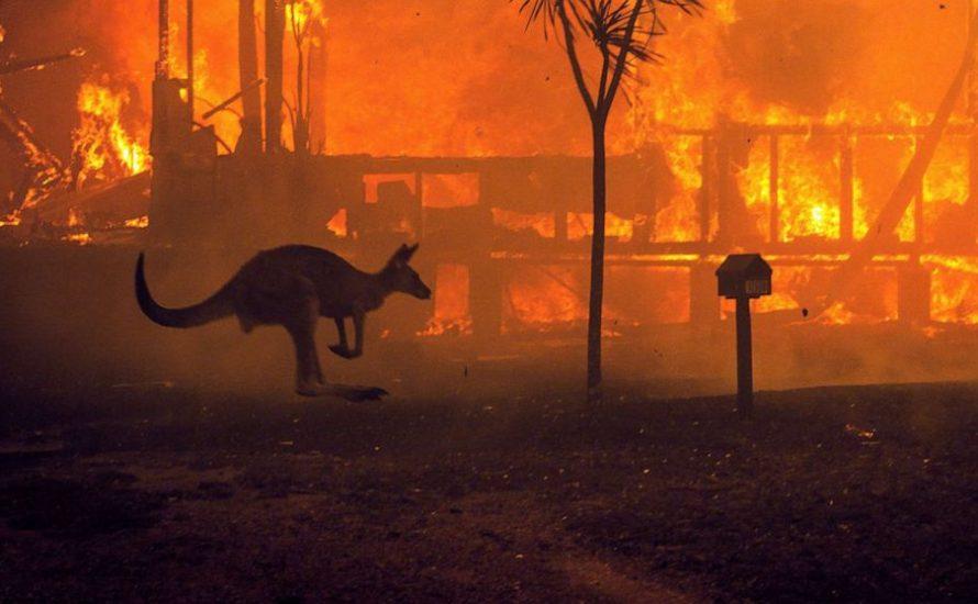 Australien brennt – doch die Regierung leugnet den Klimawandel